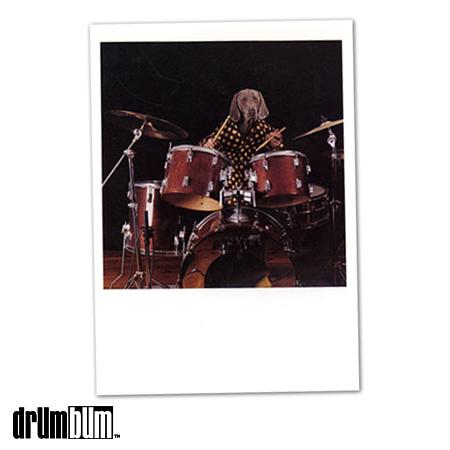 dog-drumset-drums-greeting-card1.jpg